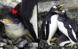 Cặp cánh cụt đồng tính nữ sướng rơn vì được nhận con nuôi