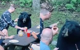 Cả gia đình đi picnic, chú gấu hồn nhiên đến xin ăn, ngồi 'nhậu' như người nhà