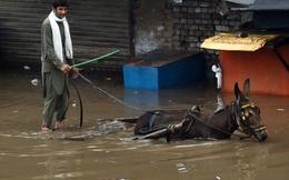 24h qua ảnh: Người đàn ông điều khiển xe lừa trên phố ngập lụt