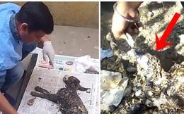 Phát hiện con vật lạ màu đen dính chặt vào vỉa hè, nhân viên cứu hộ mất 4 ngày lau rửa sạch sẽ mới sững sờ nhận ra danh tính của nó