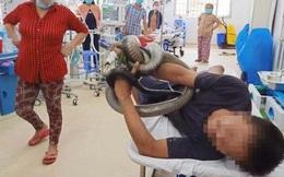 Vợ rơi nước mắt kể lý do chồng vào viện cấp cứu với con rắn hổ mang chúa quấn chặt ở tay