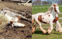 Cuộc lột xác thần kỳ của chú ngựa Pony: Từ 'xác khô trộn bùn' đến tấm thân đẹp rực rỡ