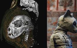 Sự thật về xác ướp thiêng không phải con người trong mộ cổ Ai Cập