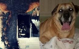 Cô chó may mắn thoát khỏi trận hỏa hoạn, 2 tháng sau dẫn gia đình đến chiếc lỗ nhỏ dưới sàn nhà chứa đựng điều kỳ diệu