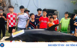 Ngư dân Quảng Nam chôn cất cá heo dài 2 mét