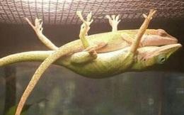 """""""Bạn trai của năm"""" cố đu trên lưới để bạn gái ngủ ngon cùng hàng loạt những điều không tưởng mà động vật làm được khiến con người tròn mắt"""