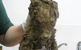 """Phát hiện con vật như cún con cứng đơ trong bùn đất, công nhân vội vã mang đến bệnh viện và """"ngã ngửa"""" khi biết danh tính thật"""
