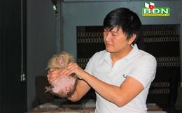 """Đắk Nông: """"Nhốt"""" loài thú ham ăn tre nứa ở trong nhà, trai Đắk Nông nuôi không kịp để bán"""