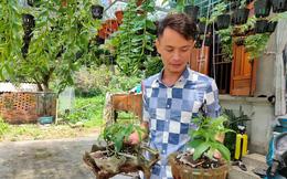 Quảng Ninh: Vườn lan phi điệp 500 giò giữa biển khơi, lan đột biến bán mỗi giò giá 30 triệu