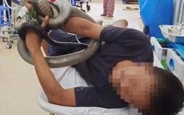 Người đàn ông bị rắn hổ mang chúa cắn ở Tây Ninh đã qua cơn nguy kịch