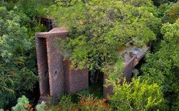 Ngôi nhà 'siêu dị' được thiết kế để ẩn mình trong tán cây