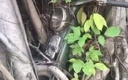 """Thực hư """"hợp thể"""" cây cổ thụ ôm chiếc xe máy gần 30 năm với biết bao lời đồn bí ẩn được chia sẻ khắp trên Tiktok"""
