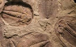 Động vật cổ đại gây nóng lên toàn cầu
