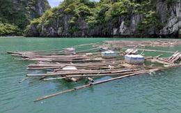 Ngán ngẩm: Ngao, hàu ở Vân Đồn mất giá, nông dân đi câu cá để kiếm ăn qua ngày