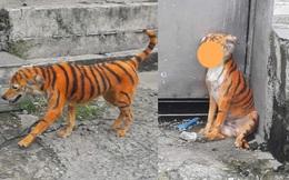"""""""Con hổ"""" đi lại trong xóm khiến bao người kinh ngạc, phần mõm của nó khiến người ta không thể nhịn cười"""