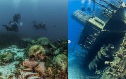 Cận cảnh bảo tàng dưới nước du khách tự do bơi lội ngắm xác tàu cổ đại