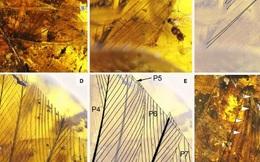 Kinh ngạc viên đá quý chứa sinh vật không đầu niên đại 99 triệu tuổi