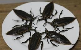 Côn trùng nhìn giống gián, mùi như bọ xít mà giá lên tới 5 triệu đồng/kg