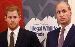 Dân tình tiếp tục xôn xao khi mối quan hệ thật sự của anh em Hoàng tử William được tiết lộ qua chính lời nói của Harry
