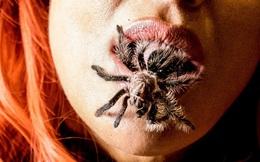 Điều gì xảy ra nếu bạn vô tình nuốt phải một con nhện độc khi đang ngủ?