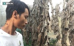 """Bỏ nghề kỹ sư, chàng trai đi nuôi ruồi trong rừng: """"Tôi được làm việc mình thích, kiếm được tiền"""""""