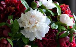 """Những bông hoa rực rỡ trông vô cùng tươi tắn nhưng ẩn chứa sự thật gây choáng váng, nhỡ tay một chút là """"tan thành trăm mảnh"""""""