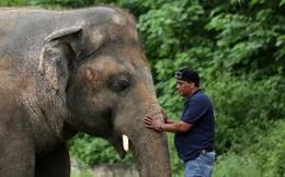 Chú voi cô độc nhất thế giới: Sau 35 năm sống mòn mỏi, nó sắp đón nhận niềm hạnh phúc tuyệt vời
