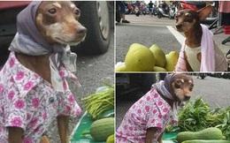 Để chó cưng ở lại trông hàng, chủ nhân ngạc nhiên trước những gì trông thấy sau khi quay trở lại