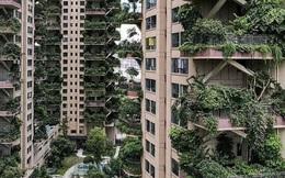 Trung Quốc tham vọng xây 'thiên đường sinh thái' nhưng lại hóa thành phố ma vì… muỗi