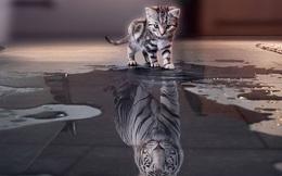 Quy luật tấm gương: Bản thân xuất chúng hay không, năng lực ở 'tầm' nào, chỉ bạn mới là người thấu đáo!