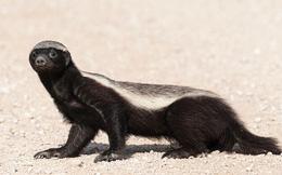 1001 thắc mắc: Những loài động vật nào sở hữu 'siêu năng lực' đến mức khó tin trong tự nhiên?