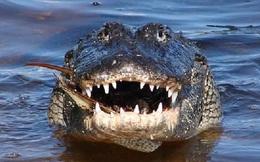 Người đàn ông một mình chiến đấu với cá sấu già khổng lồ