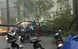 Cây xanh cao 20m bật gốc trong cơn mưa lớn ở Sài Gòn, một người bị đè trúng nhập viện