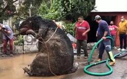 Người phụ nữ chết đuối trong nhà vì ngập lụt, sau khi thông cống phát hiện 'con chuột' khổng lồ cùng hàng tấn rác thải gây tắc cứng