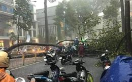Người đàn ông bị cây ngã đè trên đường ở Sài Gòn đã tử vong