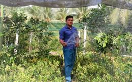 Kiểng lá tại Thạnh Phú phát triển tốt giữa đỉnh hạn mặn