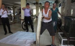 Người dân bắt được 2 con cá lệch 'khủng' trên Sông Lam, bán hơn 30 triệu đồng