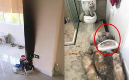 Máy lọc nước phát nổ trong nhà, phản ứng của đàn mèo khiến chủ dù tiếc của nhưng không nhịn được cười