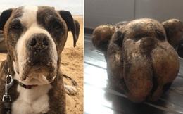 Người phụ nữ vô tình đào được củ khoai tây có hình dáng y hệt khuôn mặt chó cưng của mình, đăng tải lên MXH nhận được vô số sự đồng tình