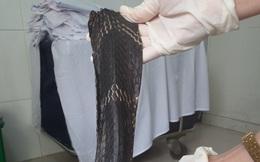 Nam thanh niên bị rắn hổ chúa dài 2,4 mét cắn, phải tháo khớp đốt ngón tay