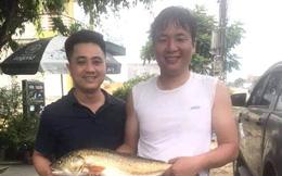 Cần thủ xứ Nghệ câu được con cá nghi là sủ vàng nặng 5kg