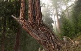 Những bức ảnh ấn tượng chứng minh sức mạnh vô tận của Mẹ Thiên nhiên