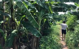 Hà Nội: Bắt giữ nghi phạm hiếp dâm bé gái trong vườn chuối ở Gia Lâm
