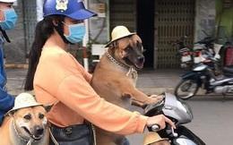Người phụ nữ chở theo 3 chú chó béo núc khiến ai đi qua cũng phải ngoái nhìn