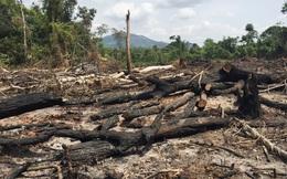 Khởi tố Ban Quản lý rừng phòng hộ để mất hơn 360 ha rừng