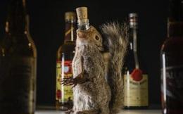 """Menu rượu """"chưa uống đã nôn"""" khiến thực khách khóc thét tại Bảo tàng đồ ăn kinh tởm ở Thụy Điển"""