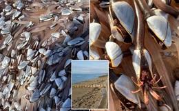 Đi dạo trên bãi biển, cặp đôi bất ngờ giàu to khi nhặt được sinh vật hiếm trị giá bạc tỷ