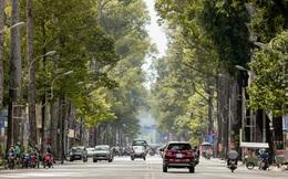 Không còn nhận ra đây là Sài Gòn trong ngày đầu tiên của năm mới, từng ngóc ngách đều hiện lên đẹp thổn thức con tim!