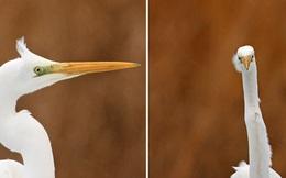 Khi lũ chim bị dìm hàng tập thể qua bộ ảnh 'góc nghiêng thần thánh, góc thẳng hết hồn'