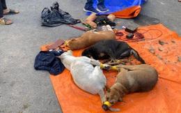 Trộm chó bị phát hiện, cẩu tặc dùng ô tô tấn công lực lượng công an ở Bình Dương
